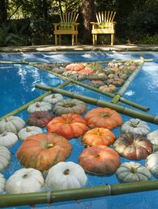 Halloween pool party ideas adams pool specialties - Halloween swimming pool decorations ...